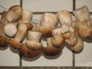 В чем выражаются полезные свойства грибов